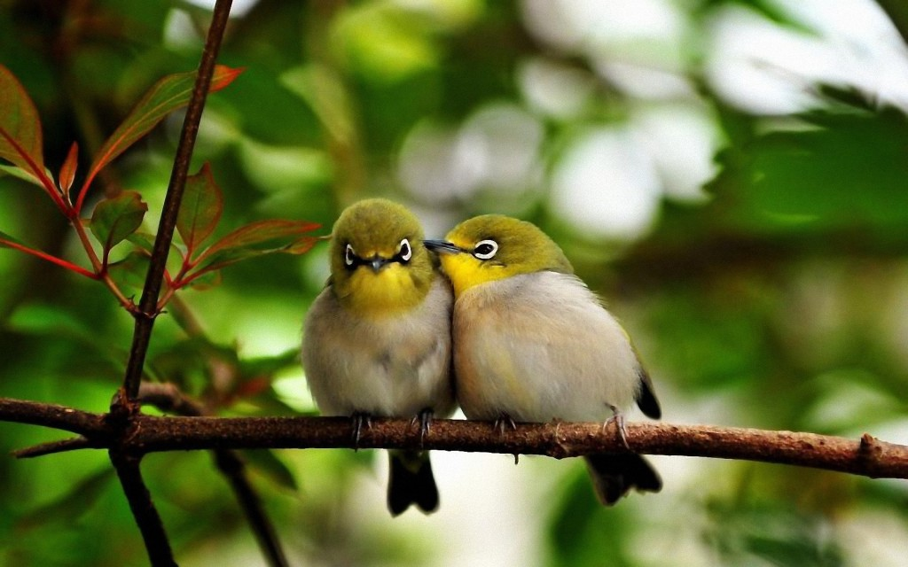 Cute Bird Wallpaper