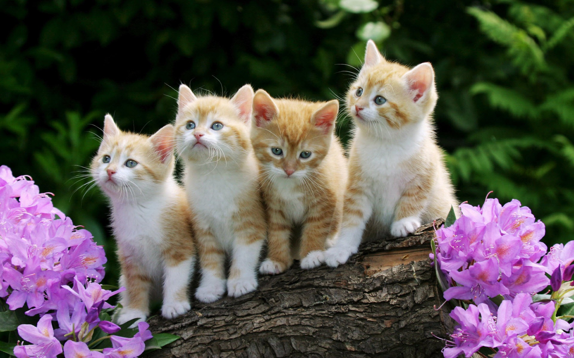 Cute Cat And Dog Wallpapers