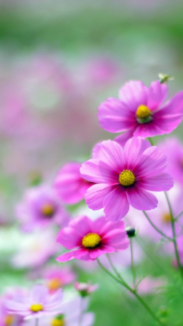 Cute Flowers Wallpapers For Mobile