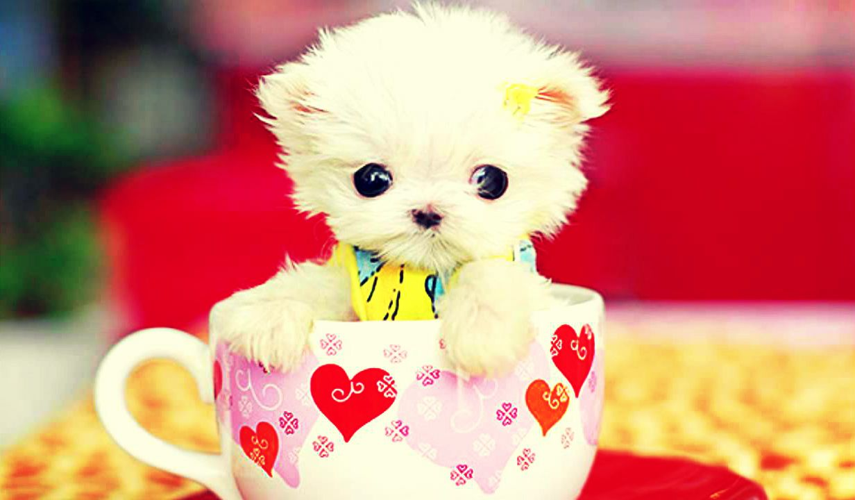 Cute HD Wallpaper Download