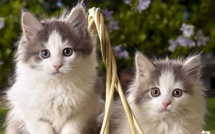 Cute Pets Wallpapers Free Download
