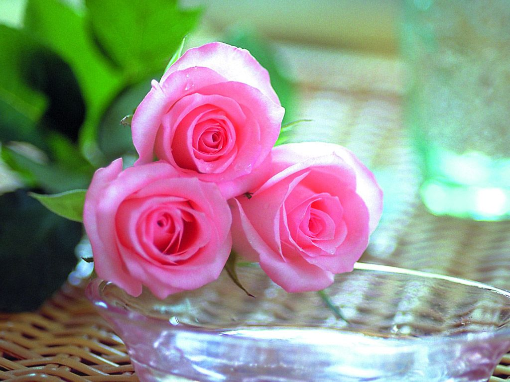 Cute Roses Wallpapers Download