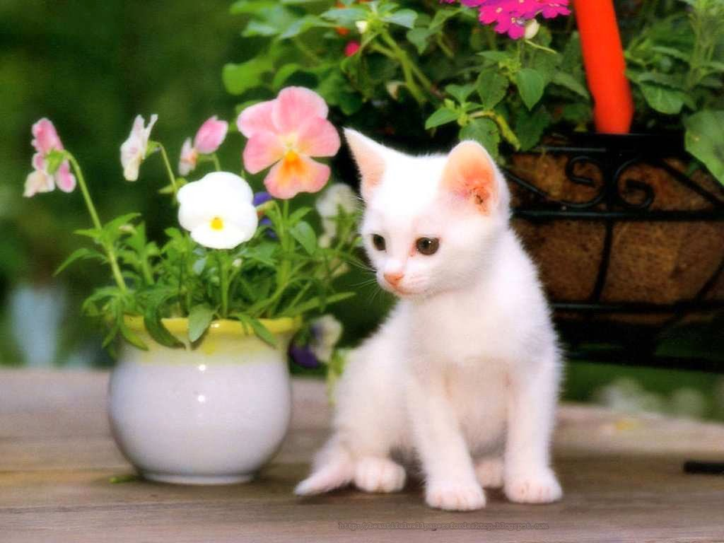 Cute Wallpaper Free Download