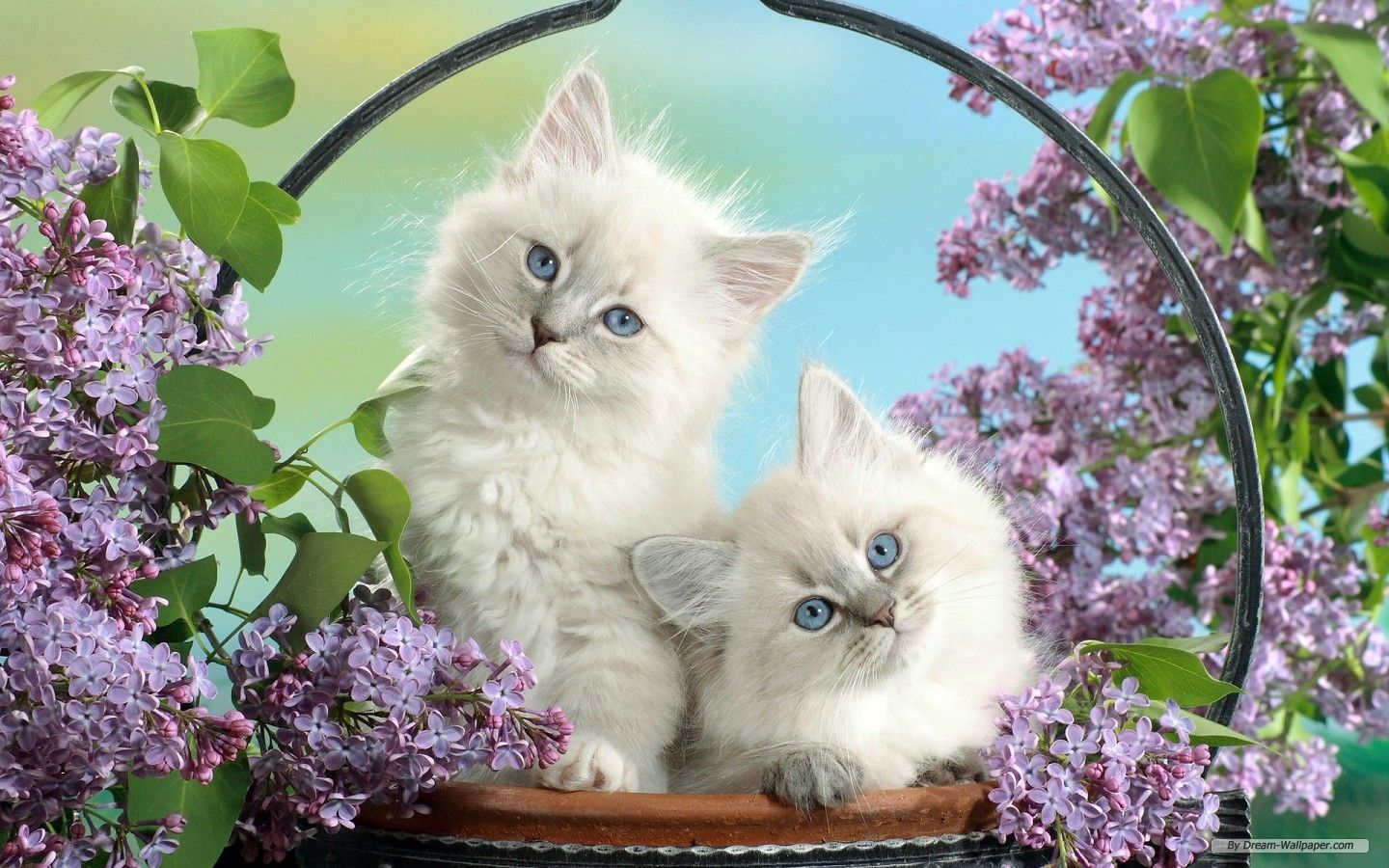 Cute Wallpaper Mobile Free Download