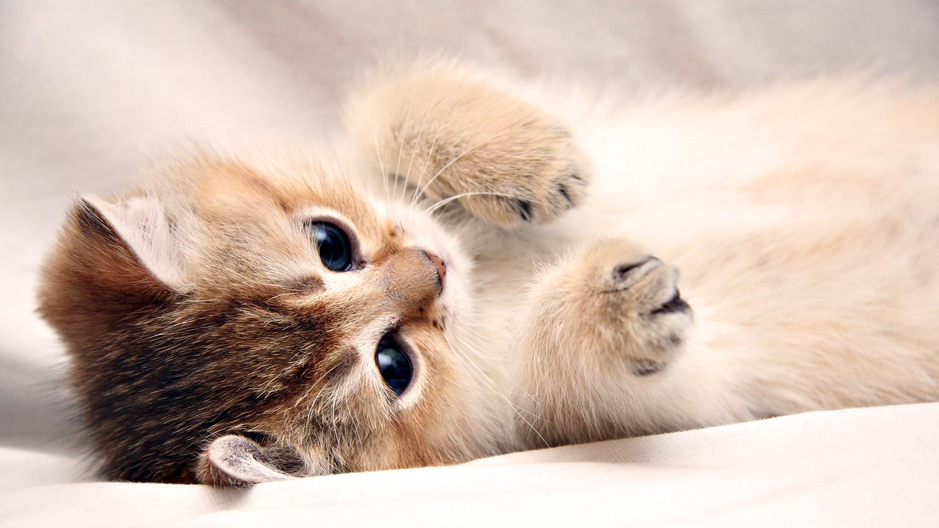 Cute Wallpapers For Laptop Free Download