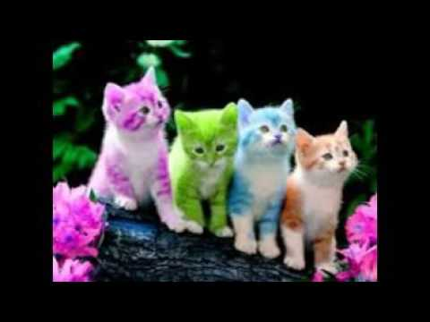 Cute Wallpapers Free Download