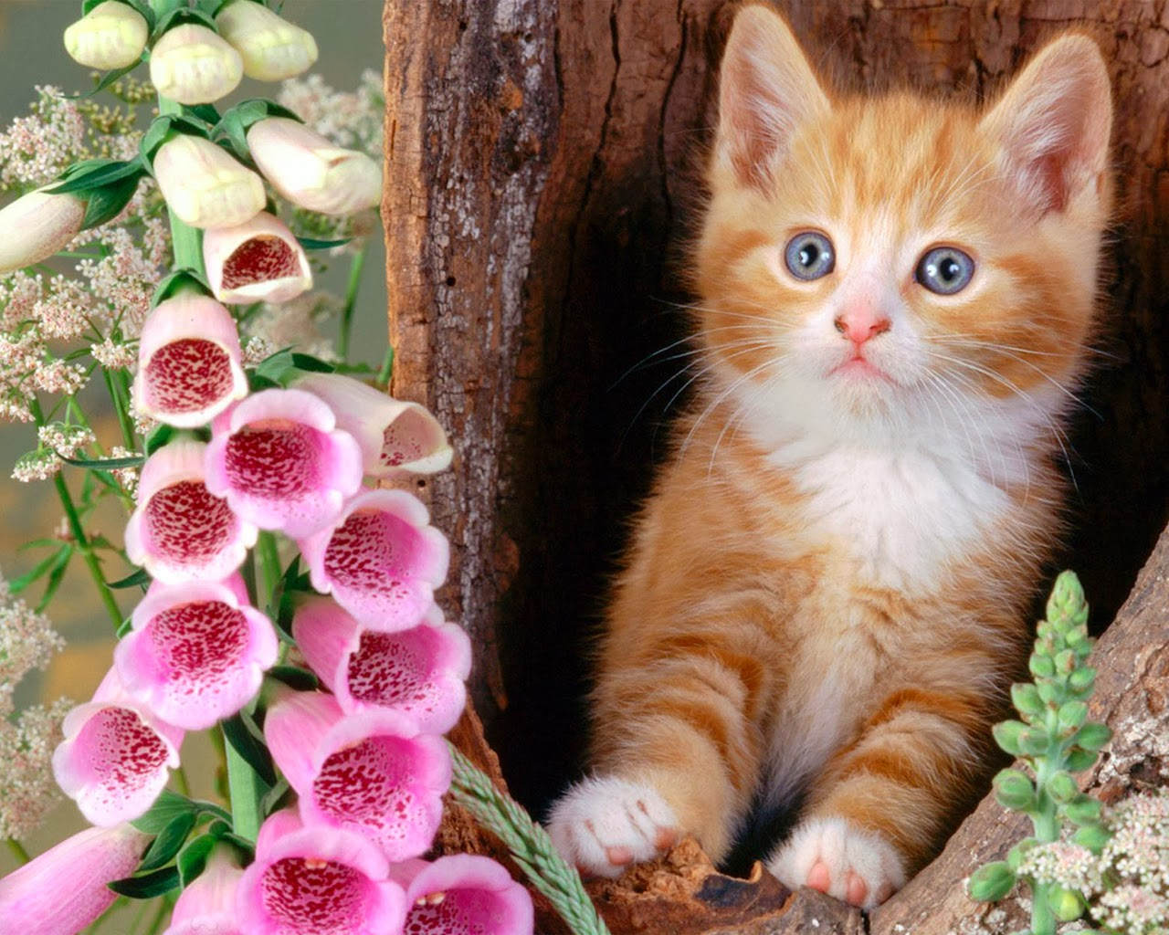 download cute wallpapers free download gallery