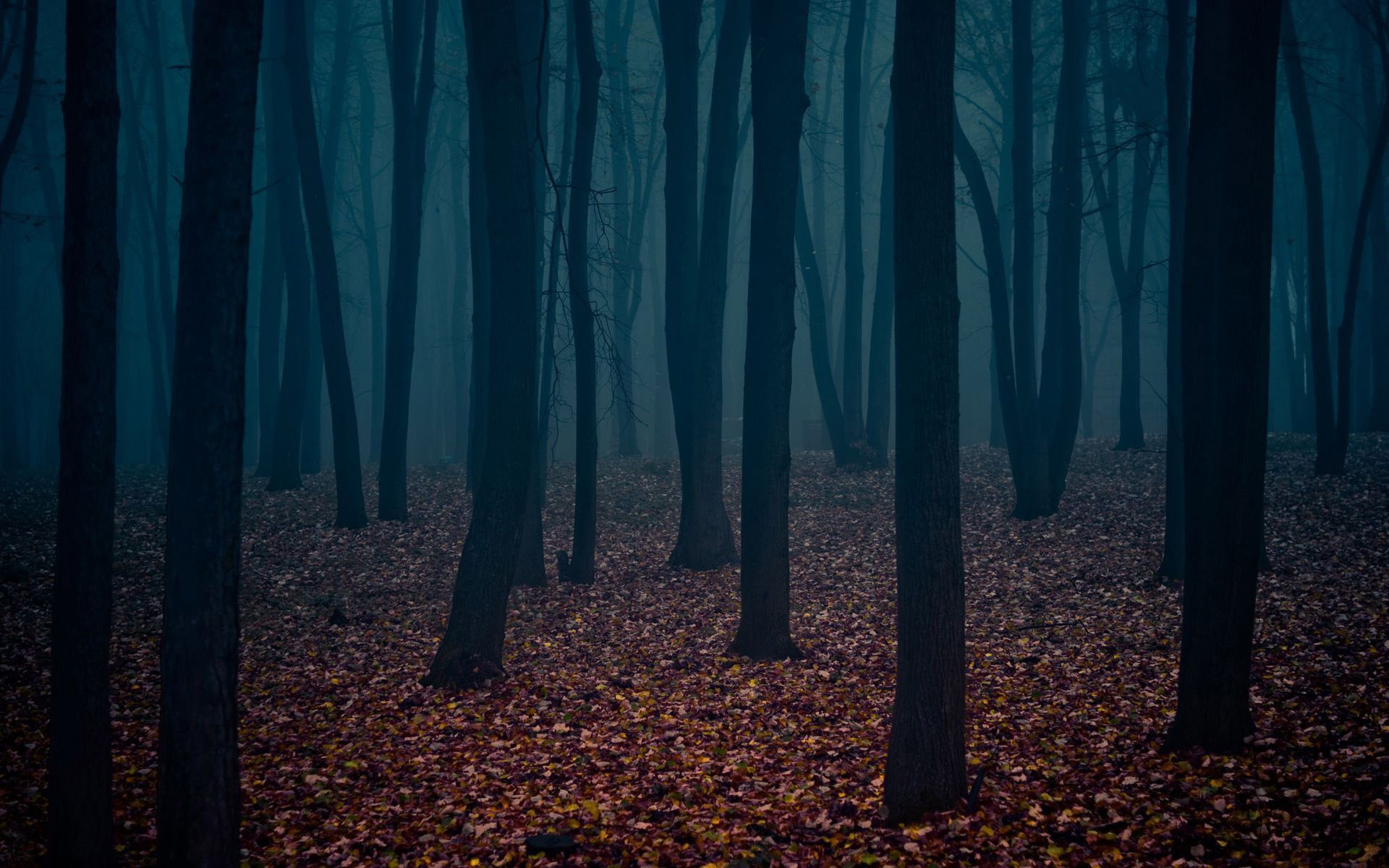 Dark Forest Wallpapers