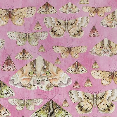 Designers Guild Butterfly Wallpaper
