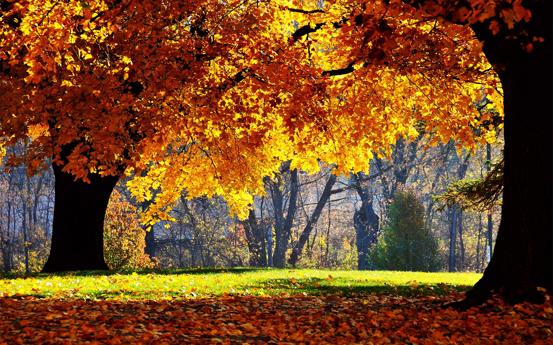 Desktop Wallpaper Fall