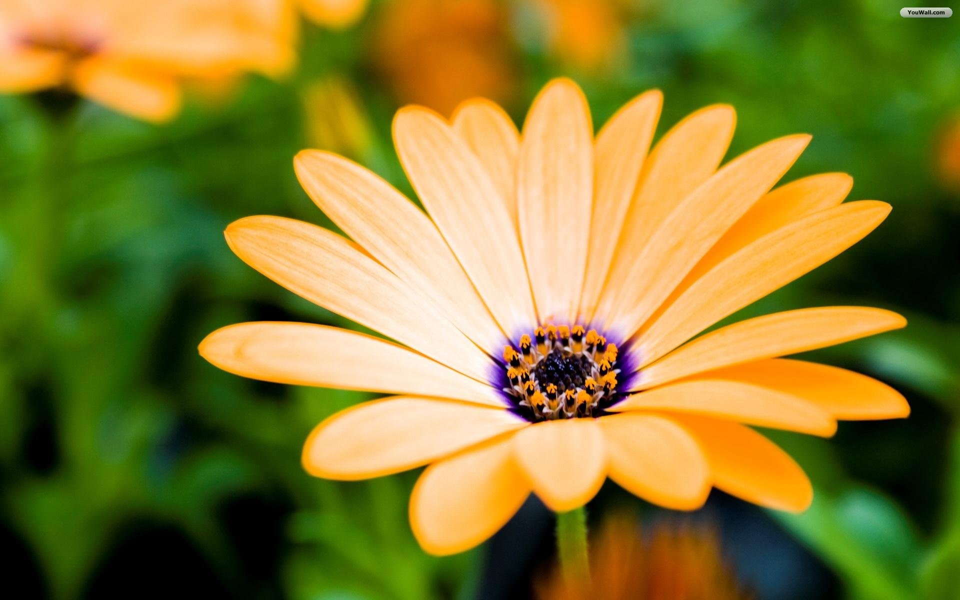 Desktop Wallpaper Images Flowers
