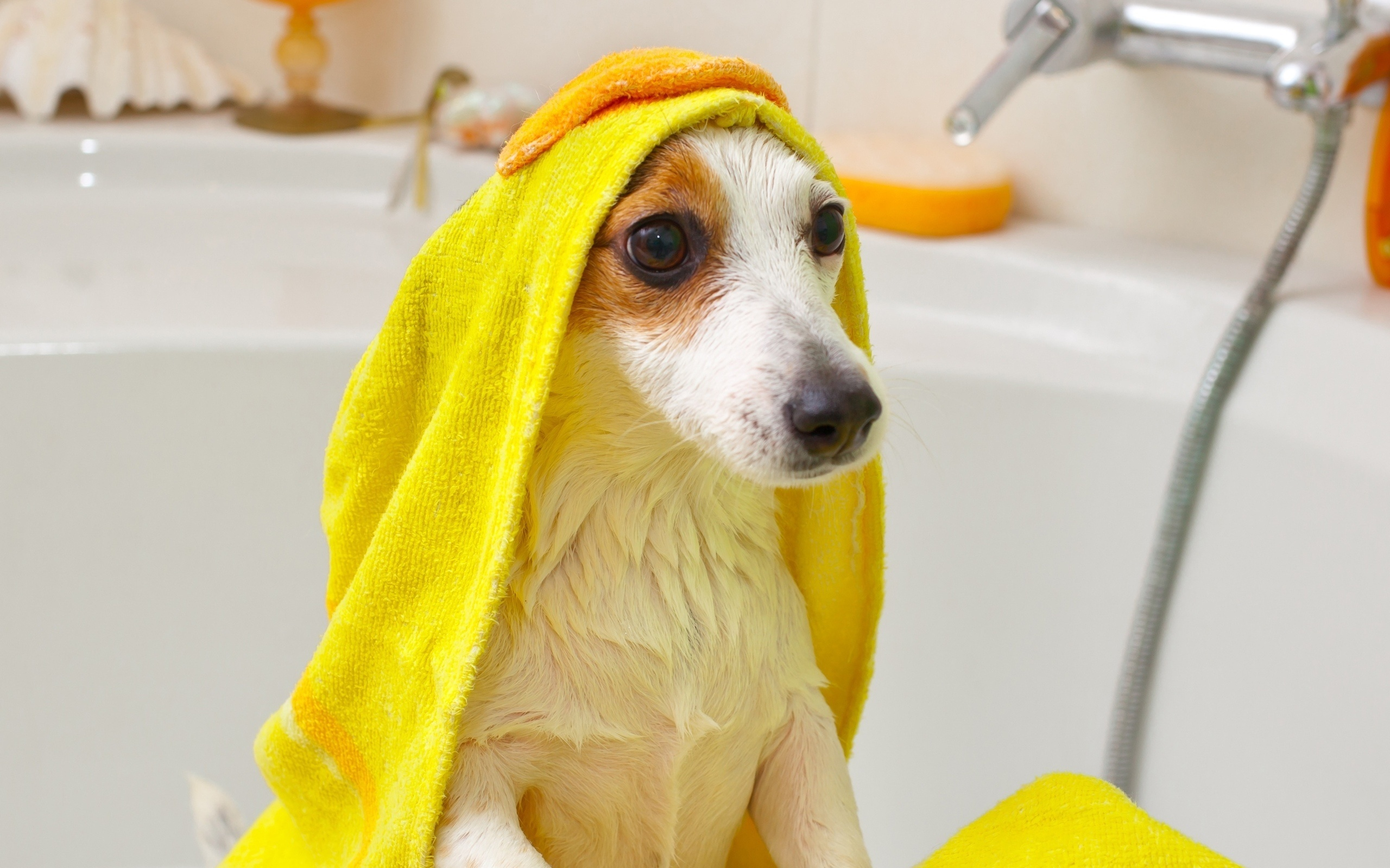 Dog Grooming Wallpaper