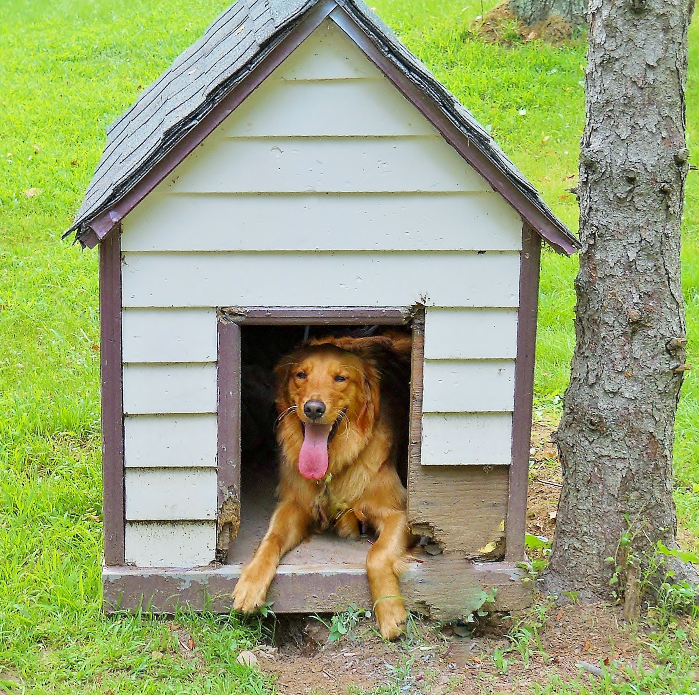 Download Dog House Wallpaper Gallery