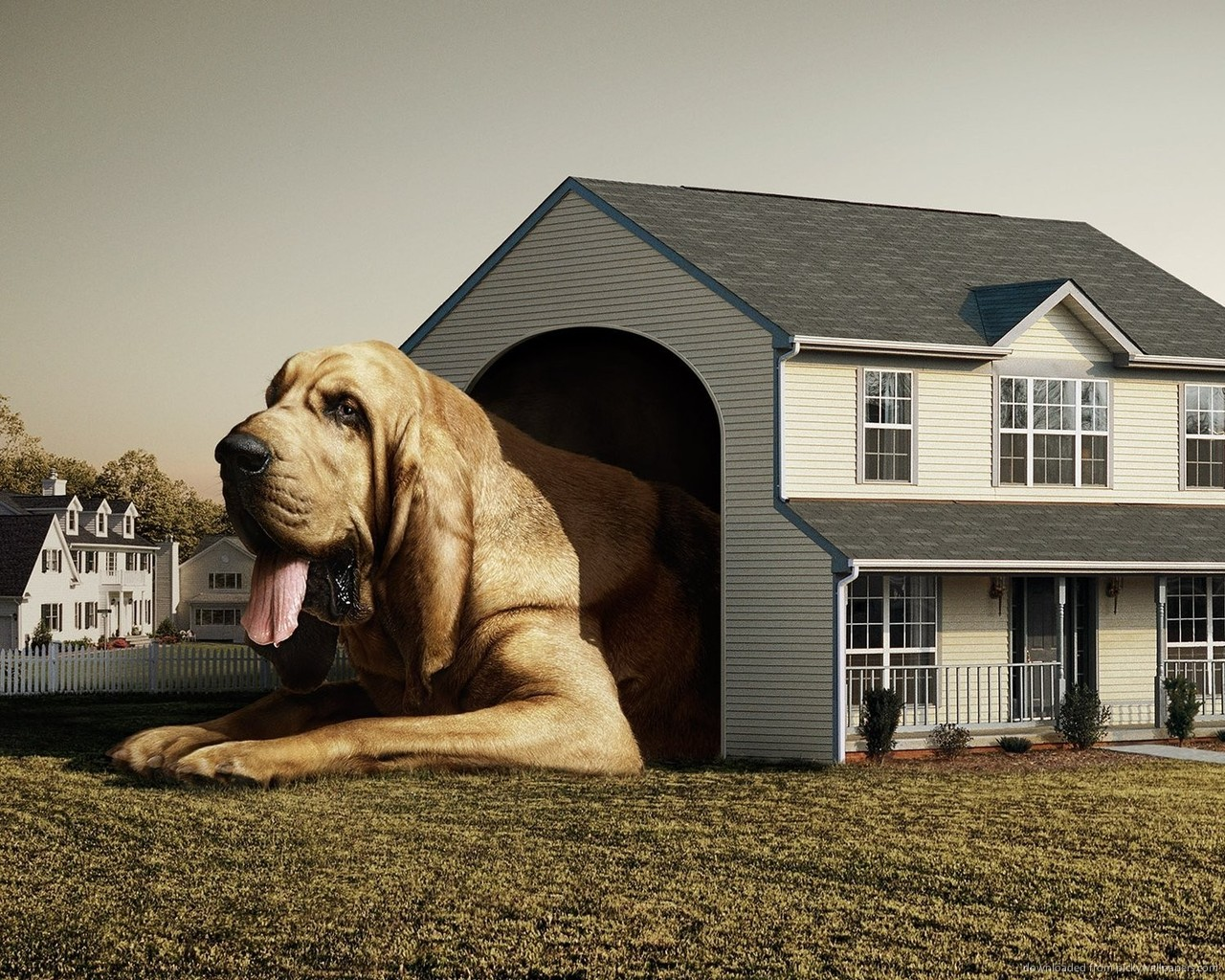 Dog House Wallpaper