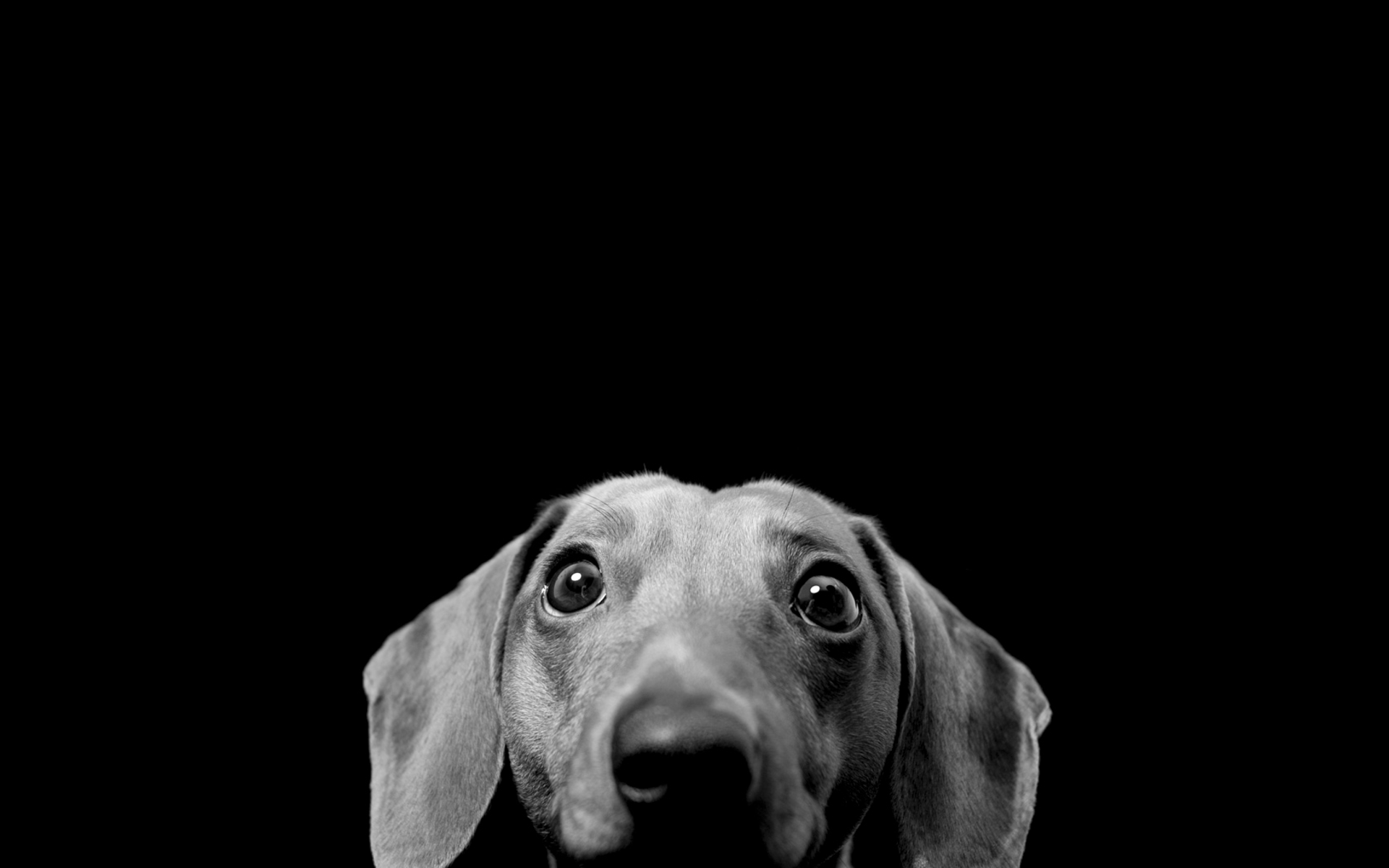 Dog Wallpaper Black And White