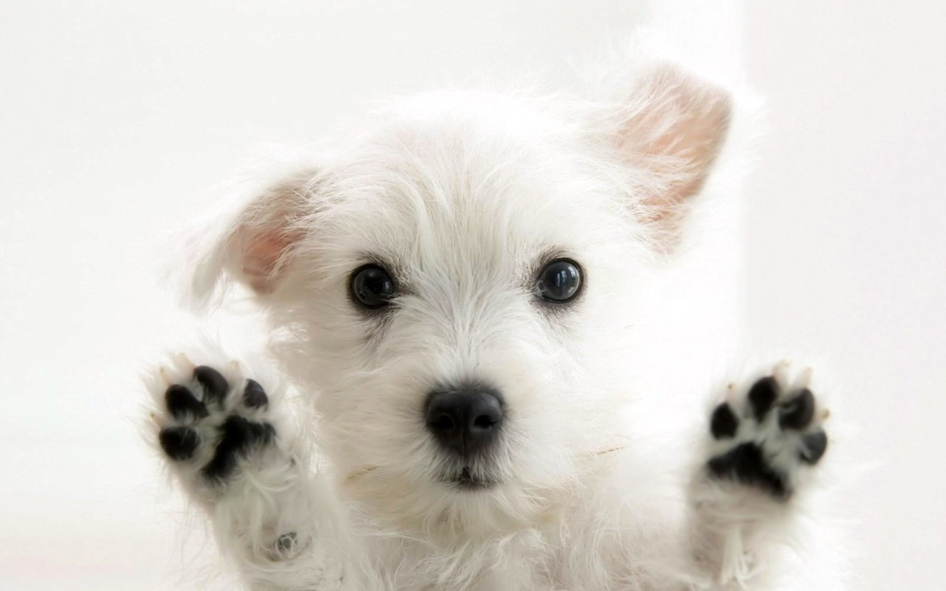 Dog Wallpapers
