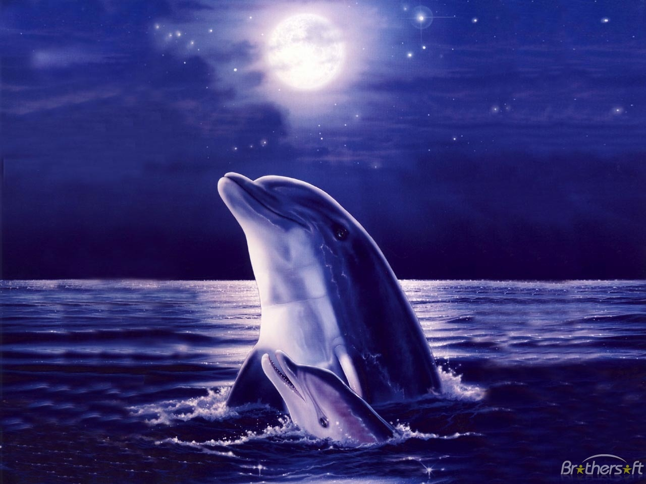 Dolphin Wallpaper Download