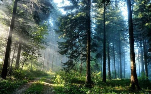 Download Forest Wallpaper