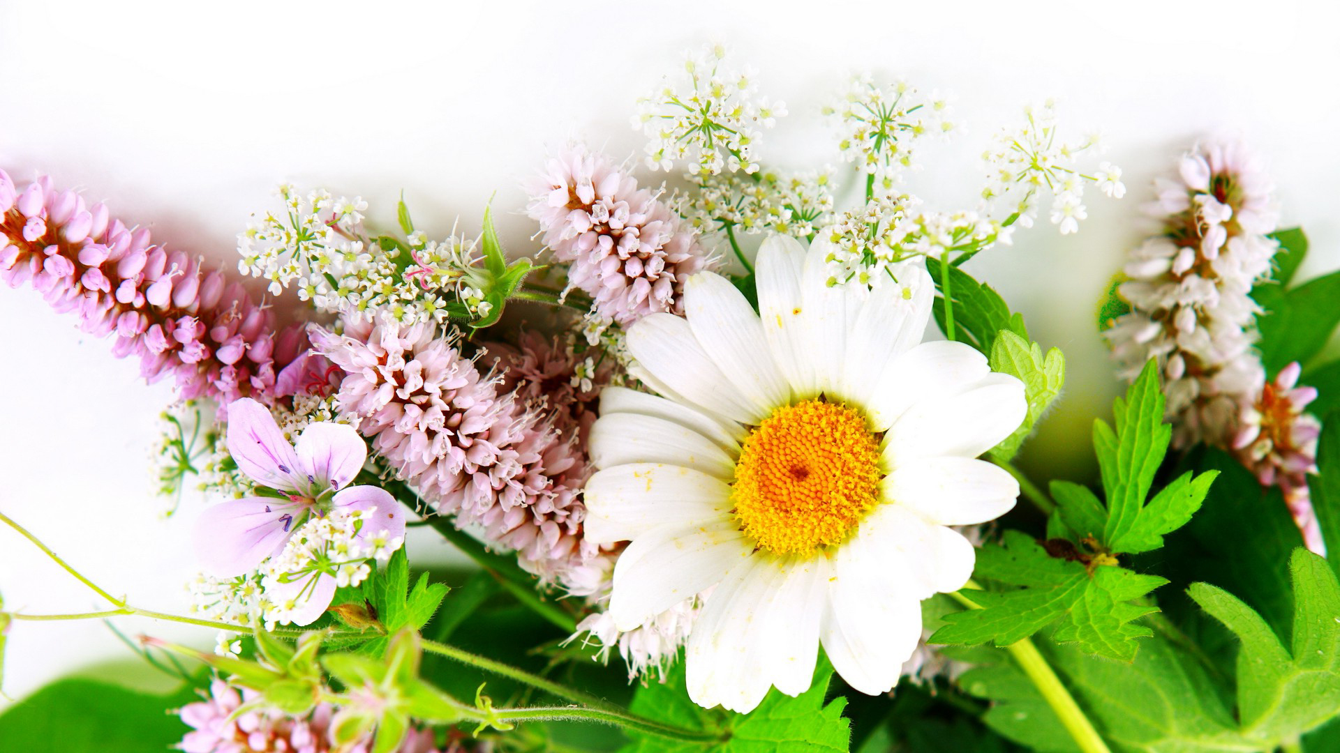 Download HD Wallpapers Of Flowers