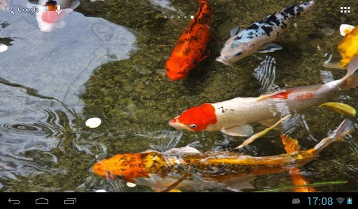 Download Koi Live Wallpaper