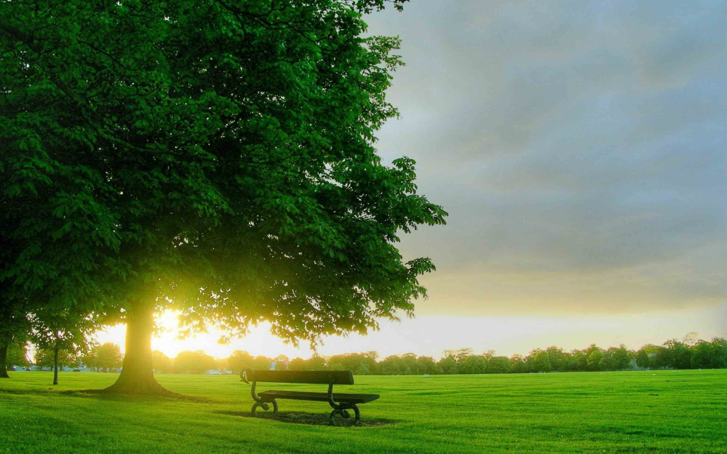 Download Nature Wallpaper For Pc