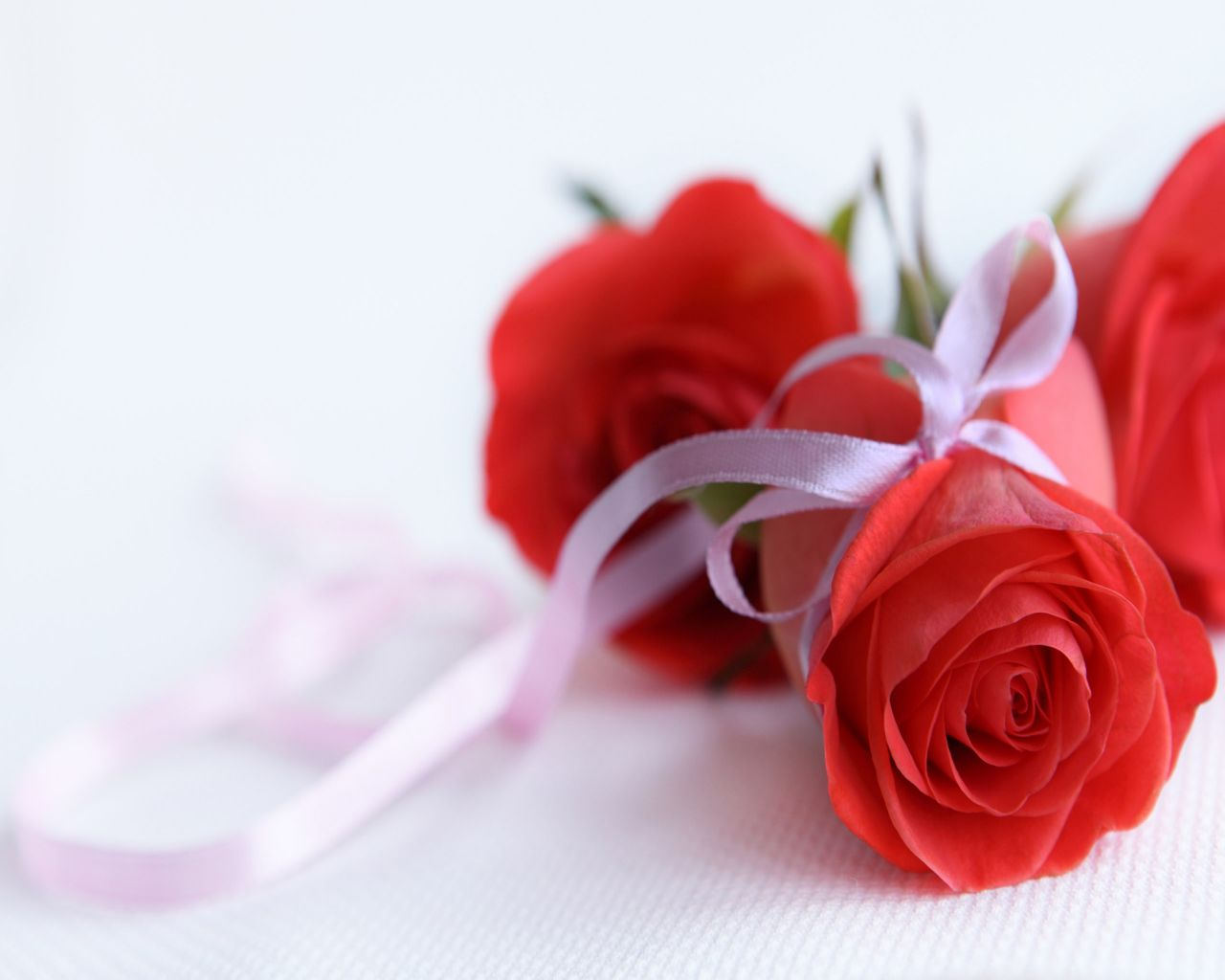 Download Of Flowers Wallpapers