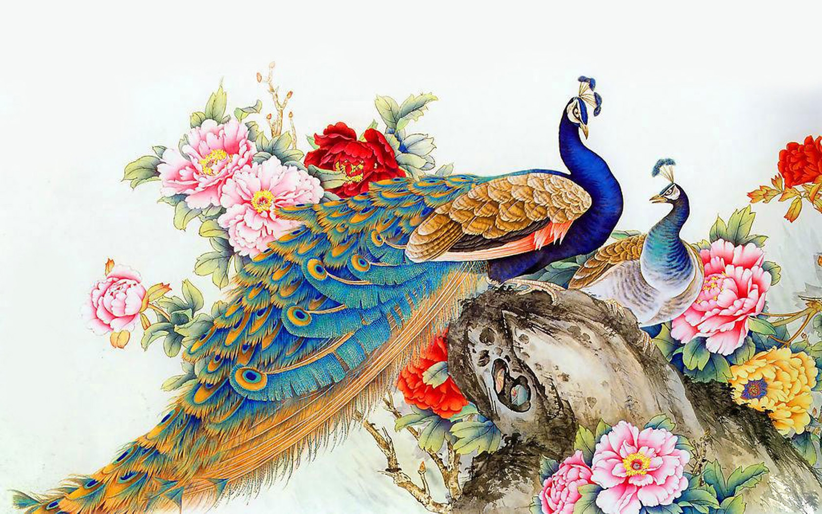 Download Peacock Wallpaper
