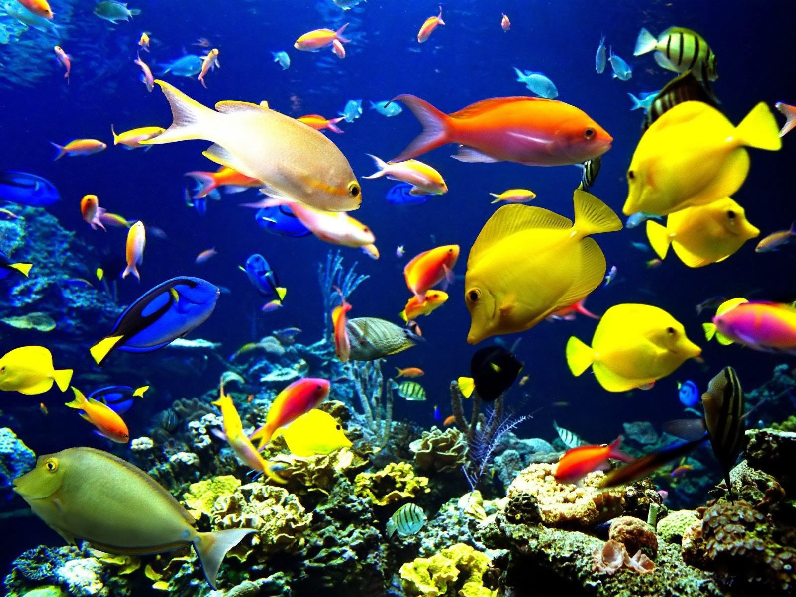 Download Wallpaper Aquarium Bergerak Untuk Windows 7