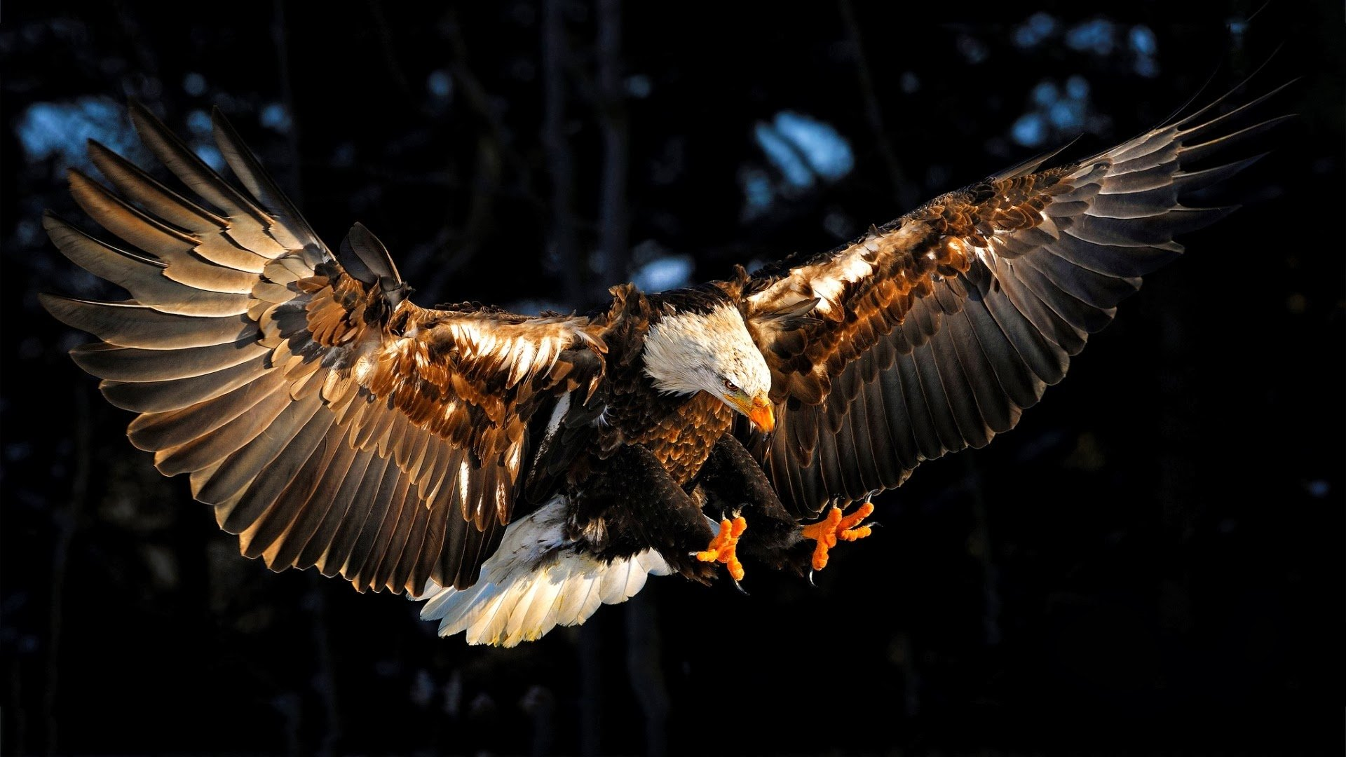 Eagle Full HD Wallpaper
