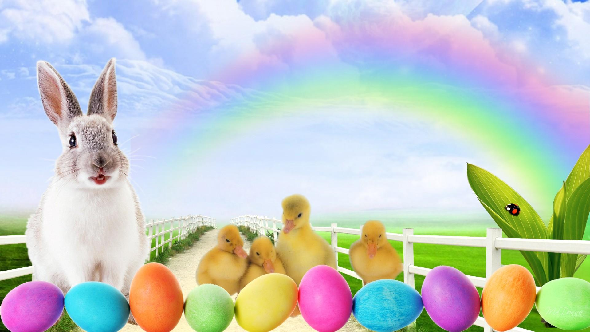 Easter Bunny Wallpaper Free