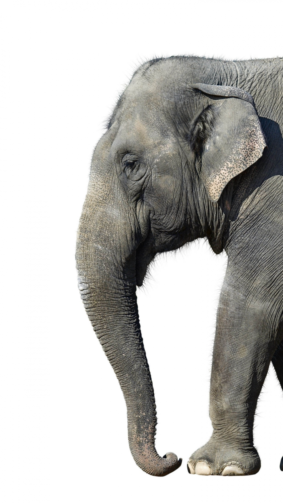 Download elephant iphone wallpaper gallery - Elephant background iphone ...