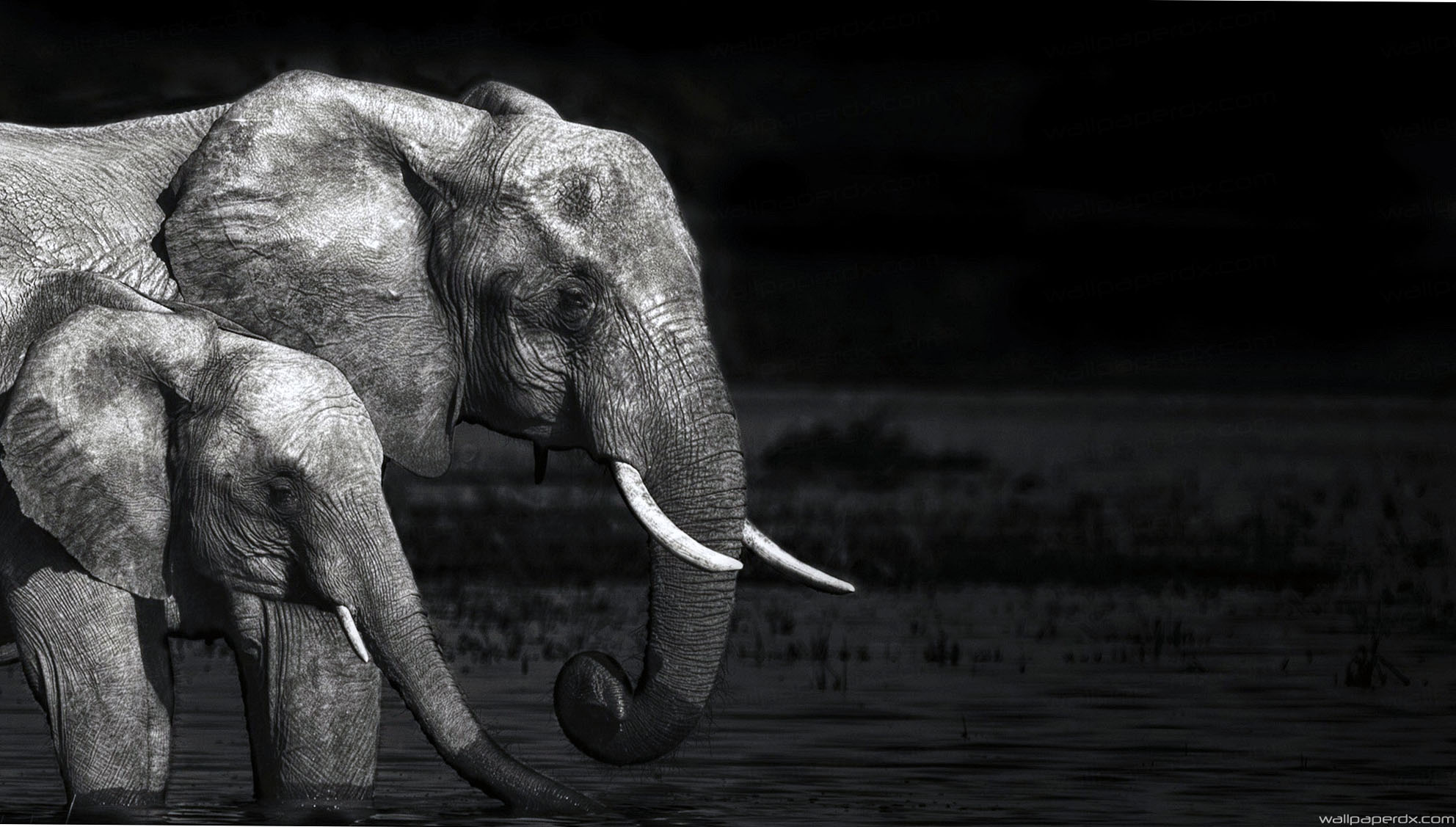 download elephant wallpaper black and white gallery