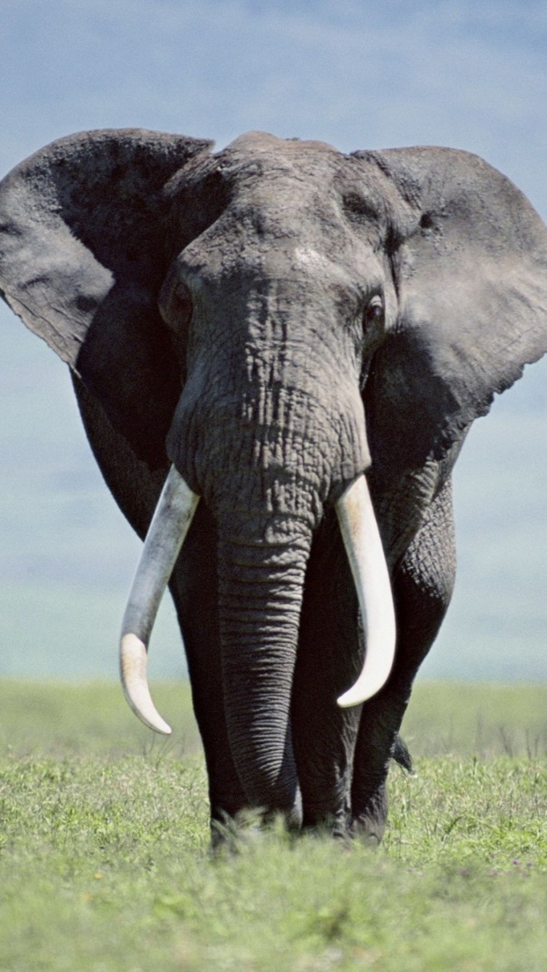Download Elephant Wallpaper Iphone Gallery