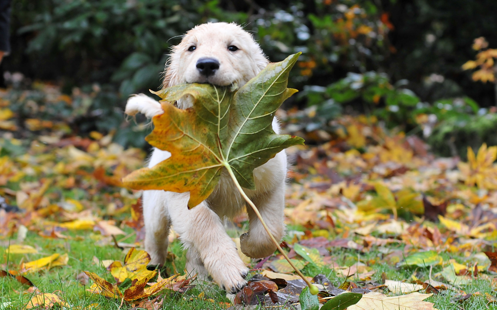 Fall Animal Wallpaper