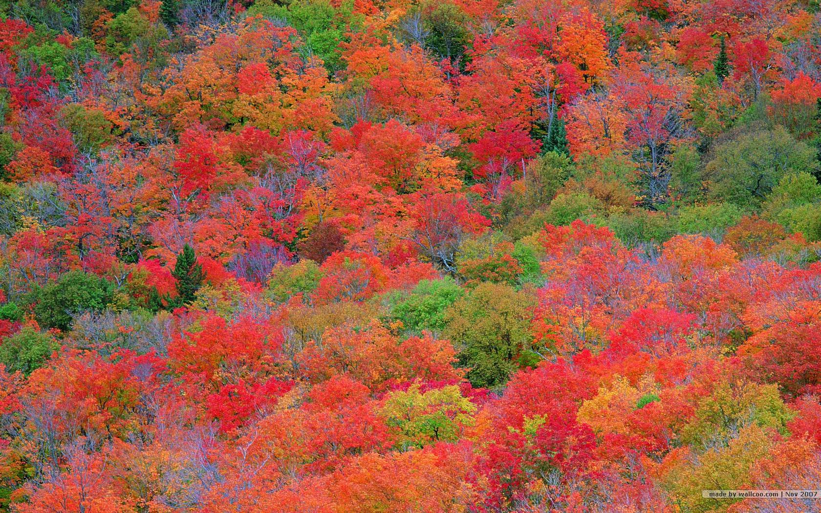 Fall Colors Wallpapers