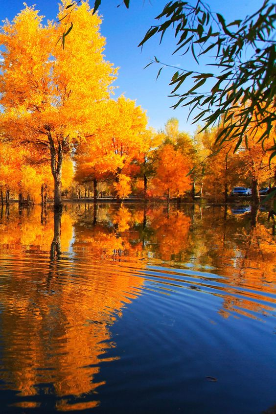 Fall Images Wallpaper