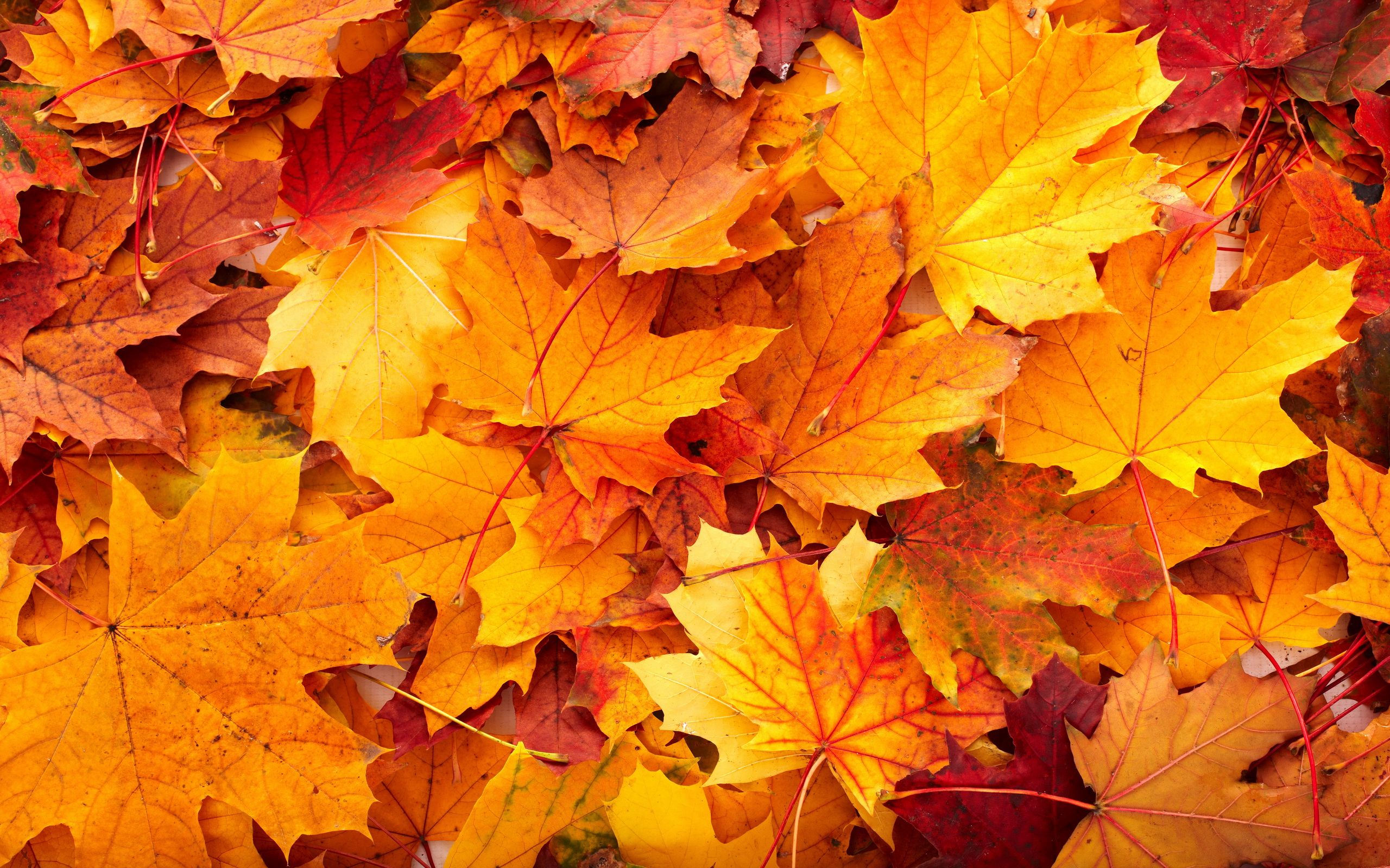 Fall Pictures For Wallpaper