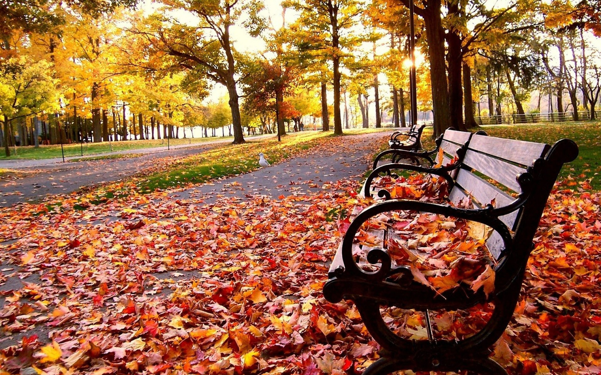 Download Fall Wallpaper Gallery