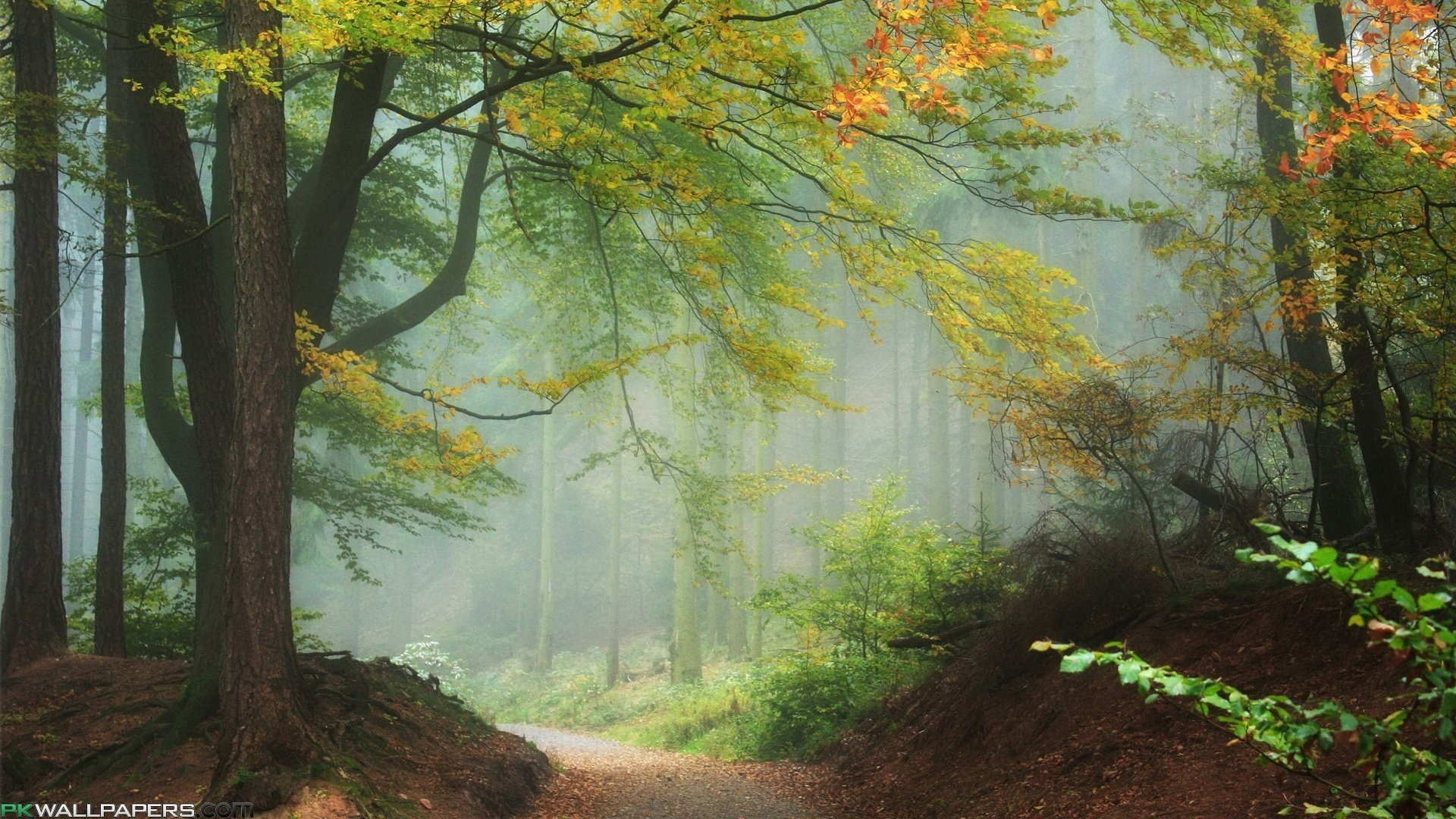 Download Fantastic Nature Wallpapers Gallery