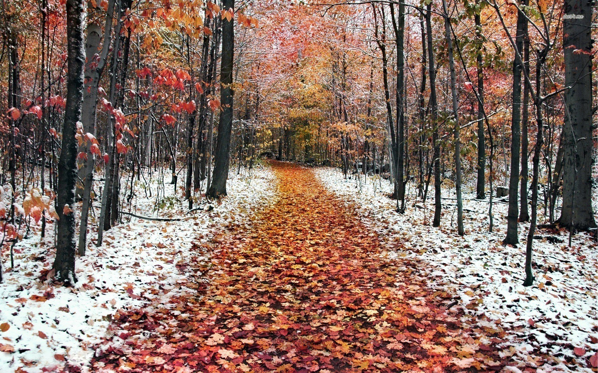 Download First Snow Wallpaper Gallery