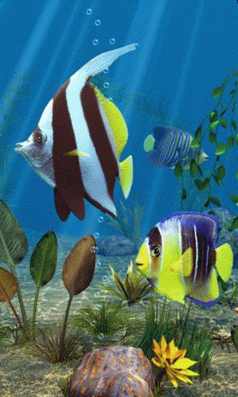 Download Fish Aquarium Live Wallpaper Free Download Gallery