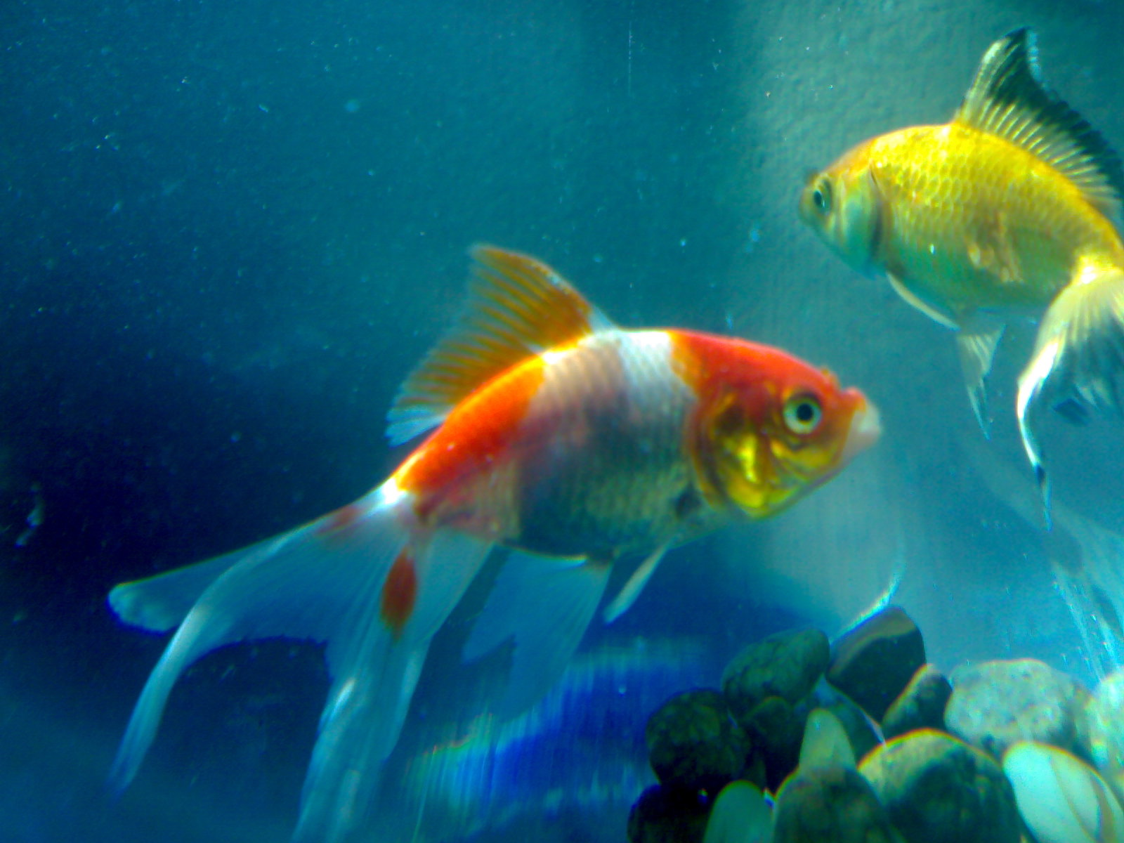 Fish Beautiful Wallpaper