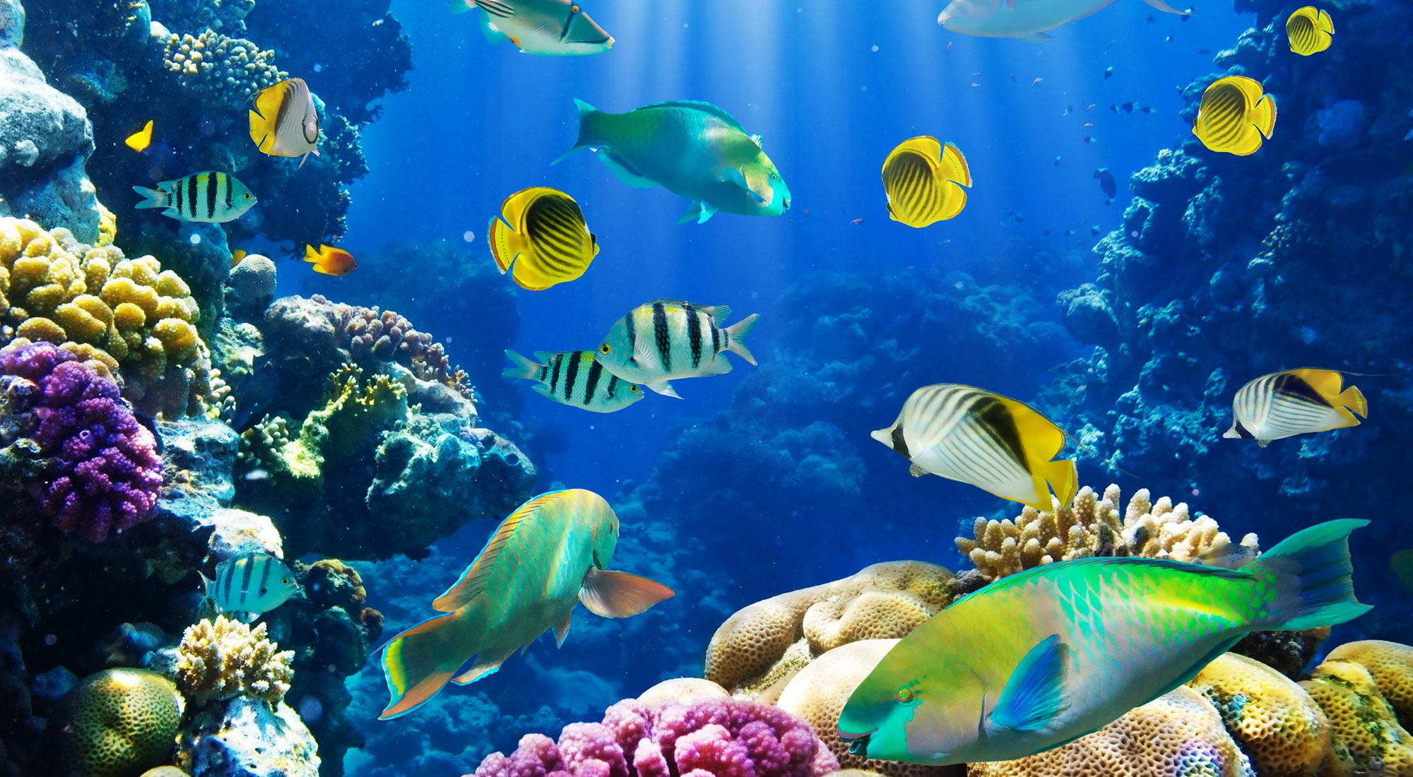 Fish HD Wallpaper Download
