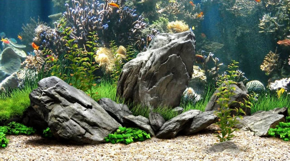 Fish Tank Background Wallpaper