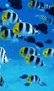 Fish Wallpaper Free Download For Mobile
