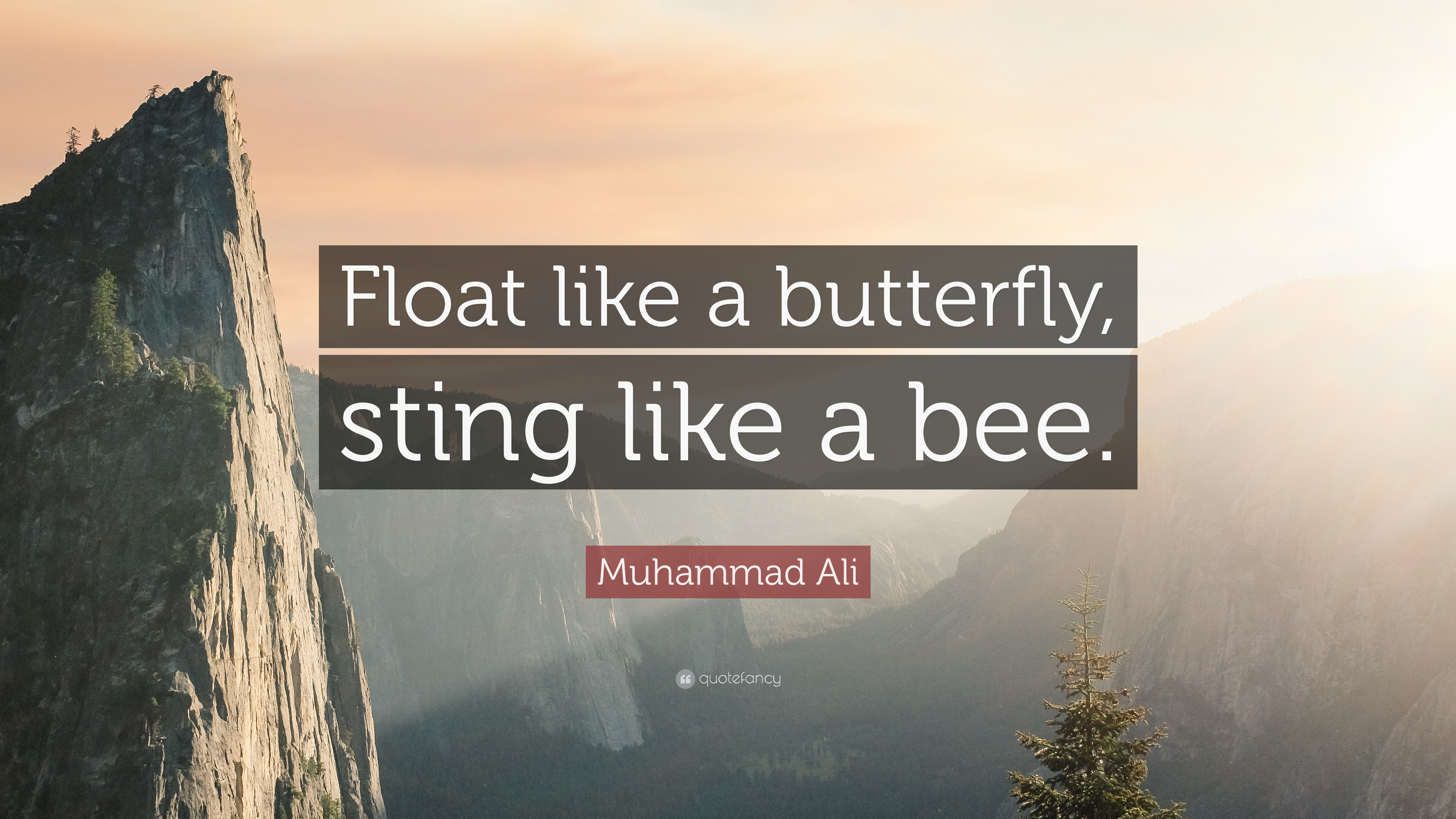 download float like a butterfly sting like a bee wallpaper