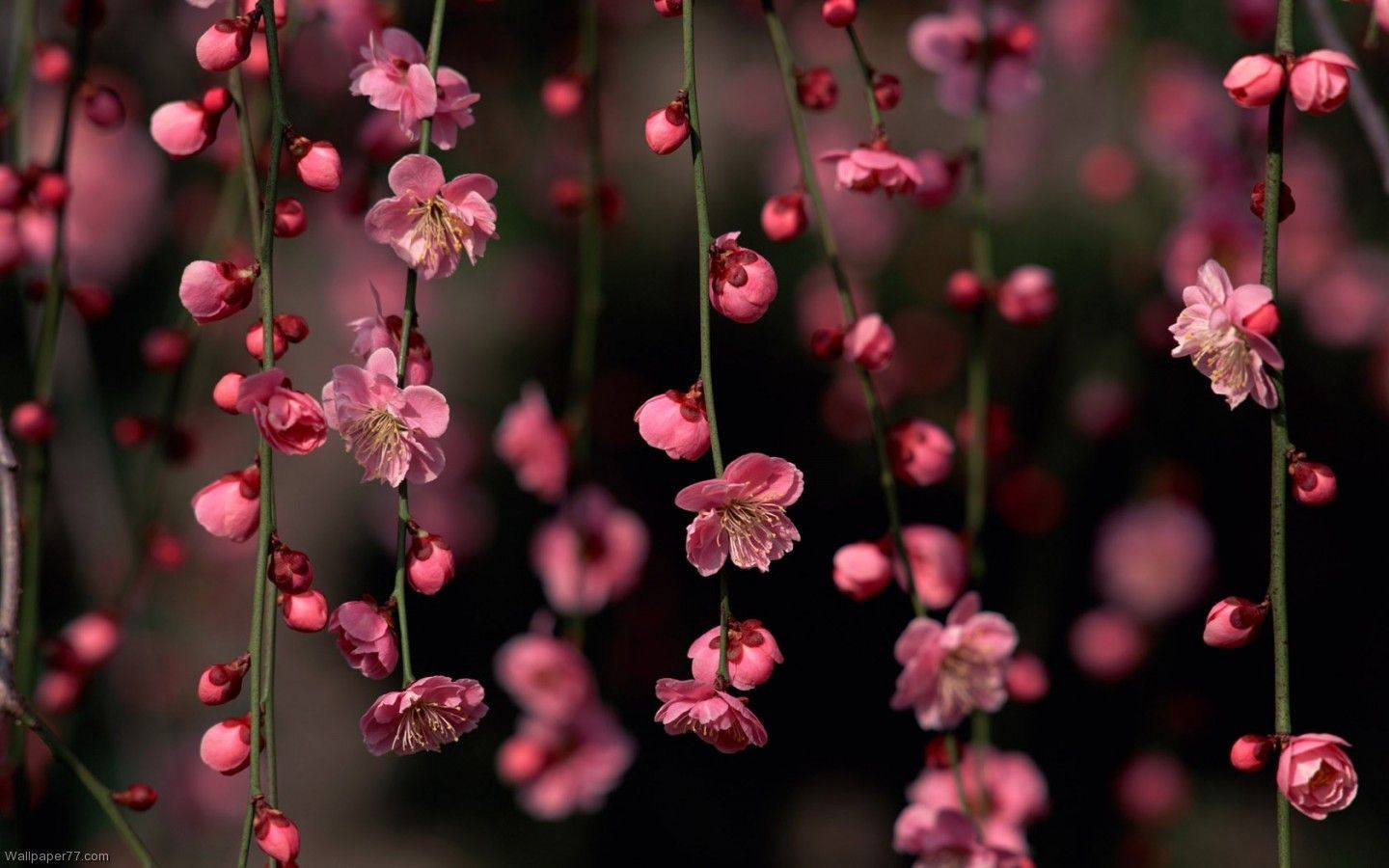 Floral Wallpapers HD