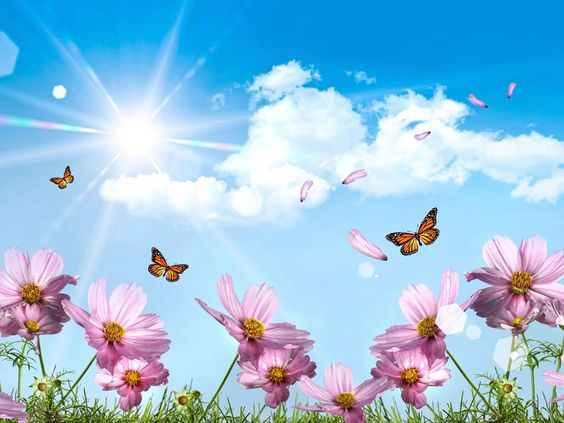 Flower And Butterfly Wallpaper