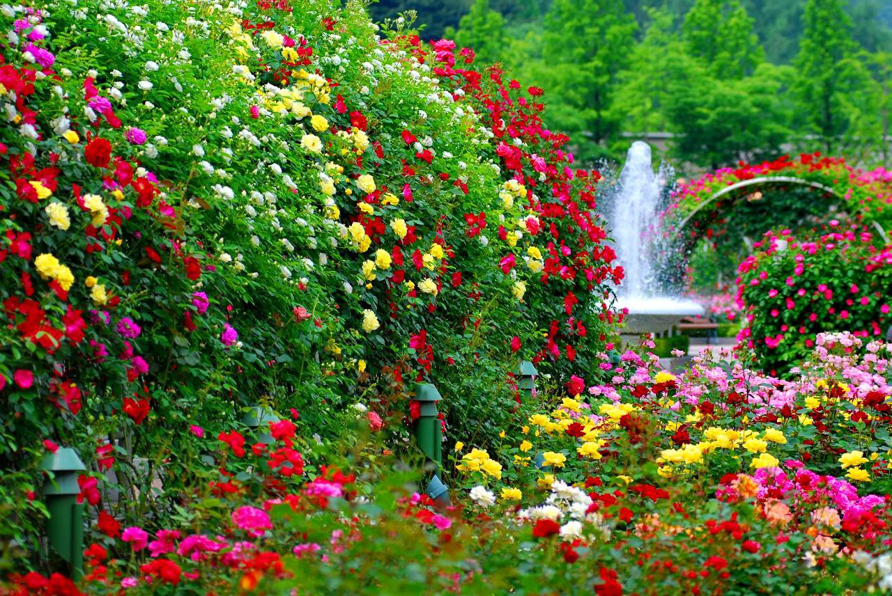 Flower Garden Wallpaper 1024x768