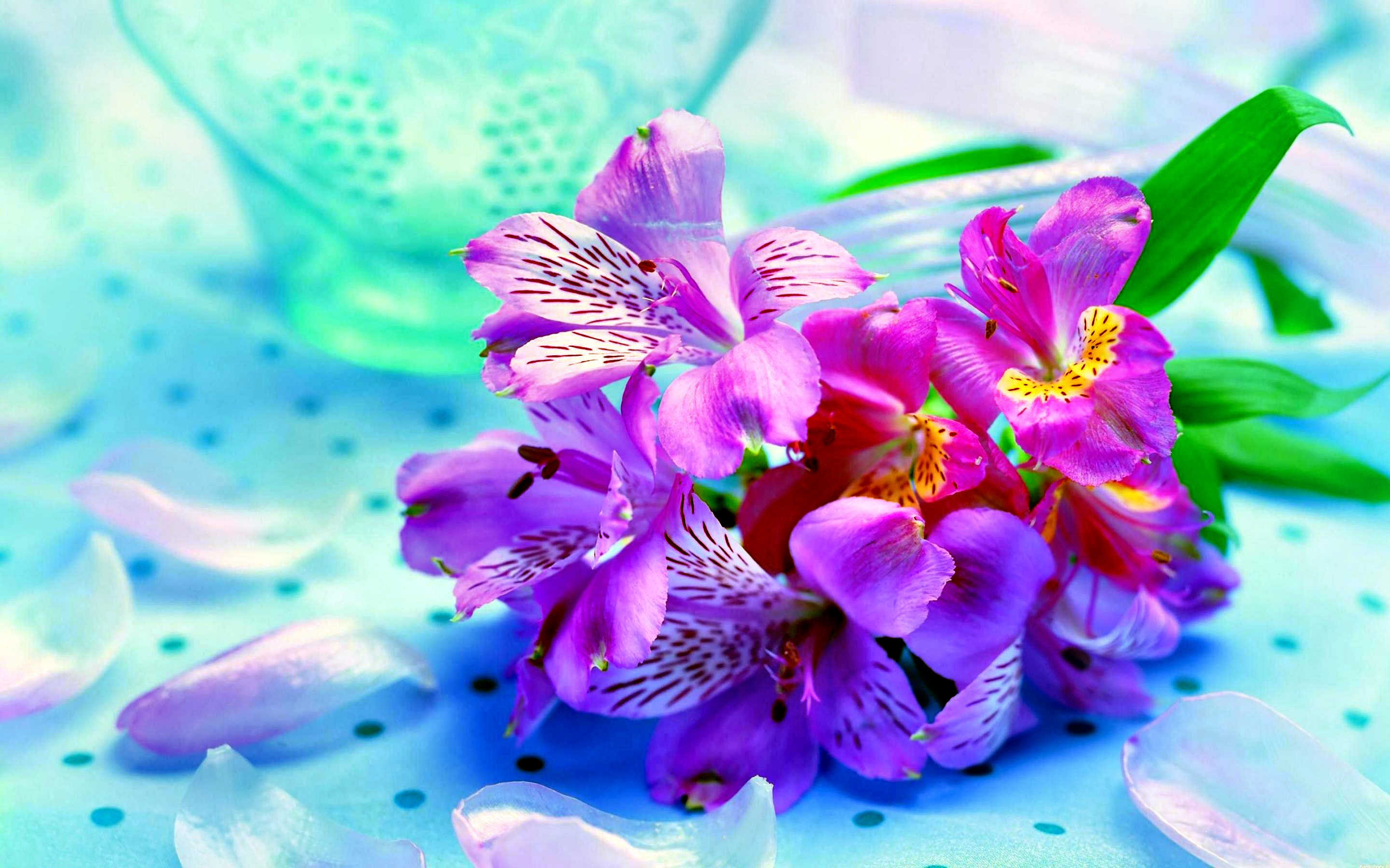 Flower Pictures For Wallpaper